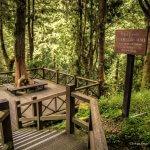 Alishan National Scenic Area - Park Narodowy - Tajwan